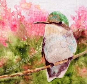 Hummingbirdcopyright