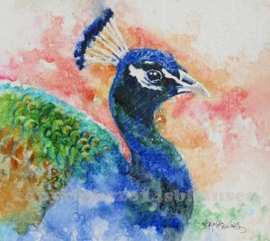 Peacock Sunrise copyright