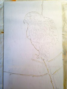 Hawk drawing on Plexiglas