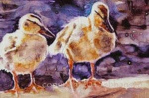 duck detail 2
