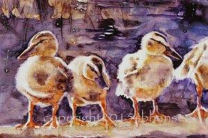 duck detail 3