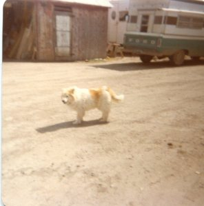 Fluff, circa 1980, on our farm in Colorado