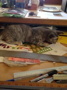 """My cat, """"helping"""" organize"""