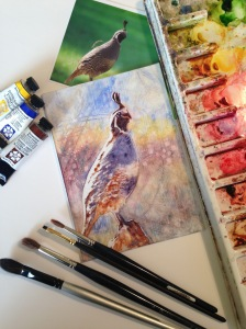 Quail in progress, 5x7 original watercolor on Plexiglas