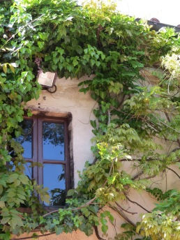 Vines encircle a window at the winery we toured