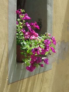 Flowers adorned nearly every window
