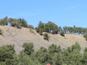 Ridge of trees in Colorado
